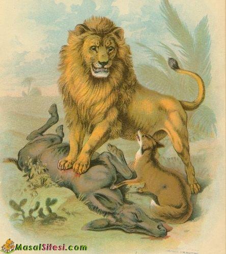 Aslan, Eşek ve Tilki