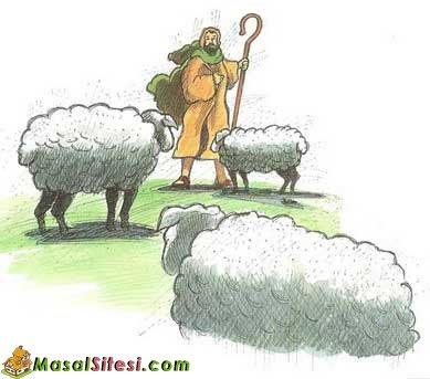 Tüccar Olan Çoban