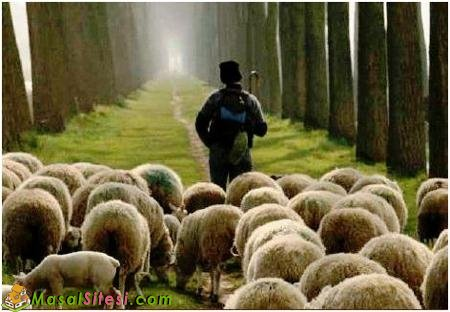 Çoban Hasan