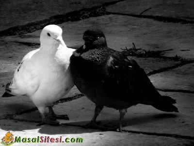 İki Güvercin