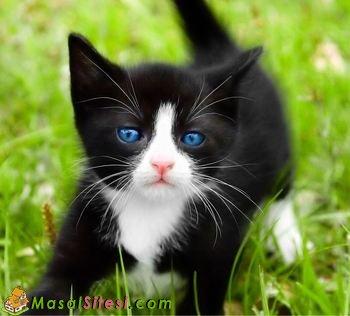 Minik Kedi Zeytin