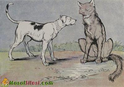 Kurt İle Çoban Köpeği